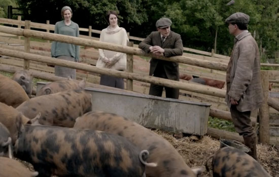 Downton's pigs